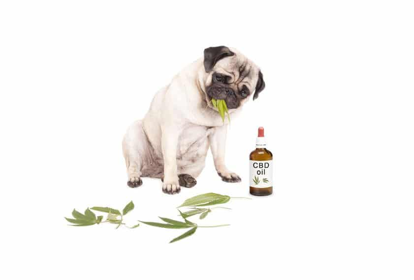 CBD Oil for Your Pets!